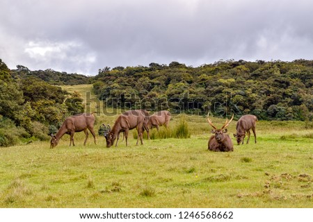Deers in the Hortons Plains National Park in Sri Lanka #1246568662