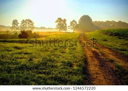 Beautiful bright sunrise with an old country dirt road heading towards the sun. Raleigh North Carolina #1246572220