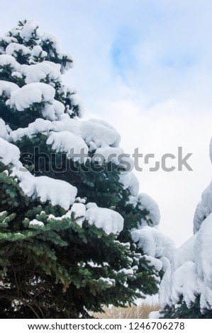 Green fluffy fir tree in the snow #1246706278