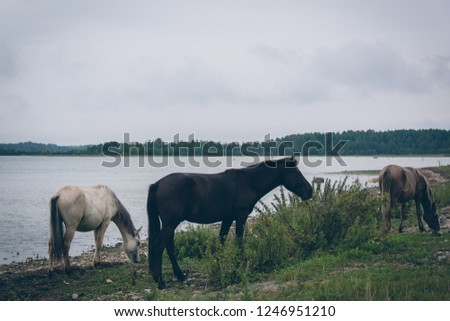Beautiful wild horses on an island coast eating grass by the sea in a cloudy day #1246951210