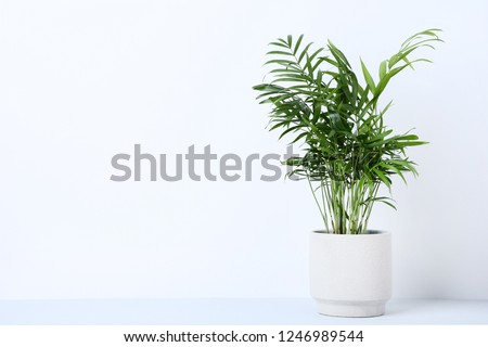 Green plant in pot on grey background #1246989544