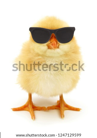 Crazy chick cool with black sunglasses