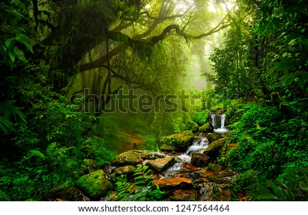 Asian tropical rainforest Royalty-Free Stock Photo #1247564464