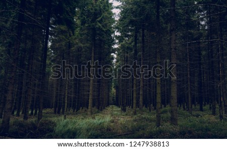 Trees and Woods and Landscape #1247938813