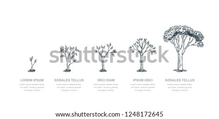 Five stages of growing tree, vector sketch illustration. Investment and finance growth business concept. Infographic design template. #1248172645