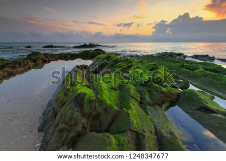 Green Seaweed on stones at the beach and sunrise time #1248347677
