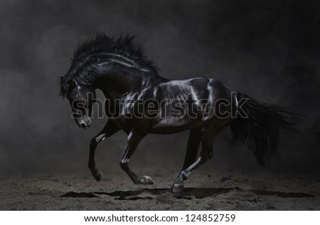 Galloping black horse on dark background.