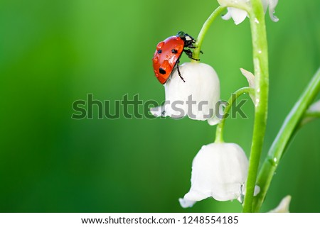insect ladybug sits on a flower of a lily of the valley Royalty-Free Stock Photo #1248554185