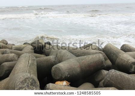 Cat lying on the rocks at the beach in Mumbai, India #1248585505