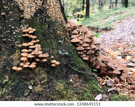 Wood Mushrooms Fungi in the Forest /Type of Beech #1248645151