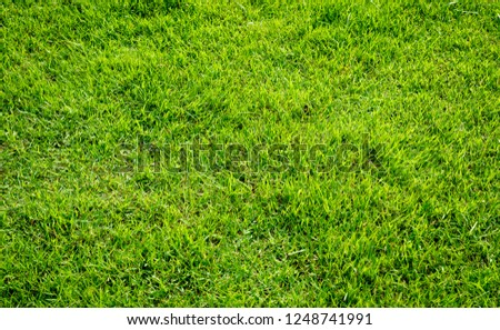 Green grass texture for background. #1248741991