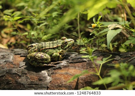 frog on a log, forest #1248764833