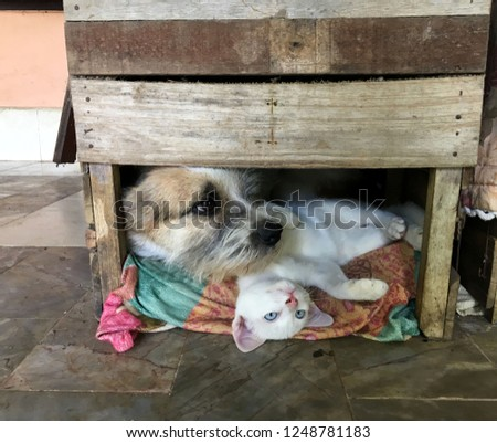Young white pretty cat and dog sleep,relax and playing in wooden box #1248781183