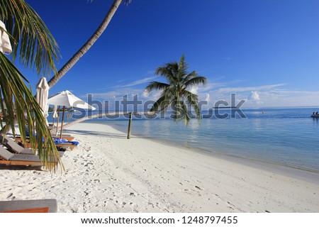 Maldives sky and beach and tree #1248797455