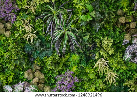 Green leaves with vegetation on wall background. Plant wall with lush green colors. Green leaves texture. used for fresh or Background concept. Royalty-Free Stock Photo #1248921496