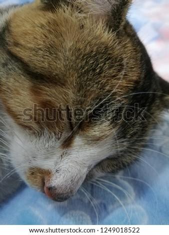 sleeping cat closeup shots #1249018522