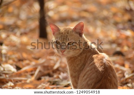 Golden cat at golden place #1249054918