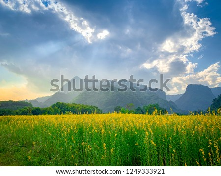 Yellow flower field with cloudy sky and mountain backgrounds. #1249333921