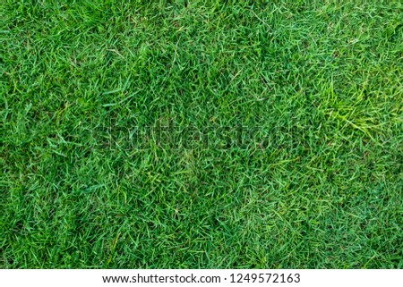 Green grass texture for background. Green lawn pattern and texture background. Close-up. #1249572163