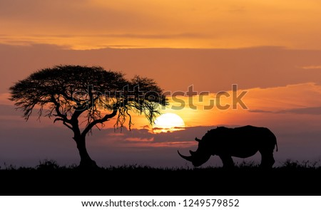 Typical african scenery, silhouette of large acacia tree in the savanna plains with rhino, rhinoceros, Africa wildlife and wilderness sunset concept #1249579852