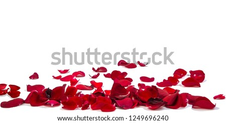 Petals Stock Image with blur effect