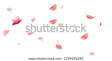 Petals Stock Image with blur effect #1249696285