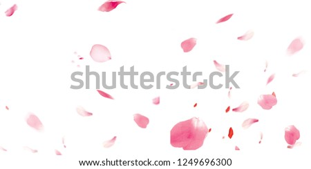 Petals Stock Image with blur effect #1249696300