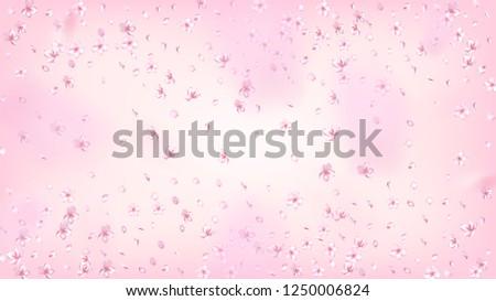 Nice Sakura Blossom Isolated Vector. Tender Showering 3d Petals Wedding Pattern. Japanese Oriental Flowers Illustration. Valentine, Mother's Day Watercolor Nice Sakura Blossom Isolated on Rose #1250006824