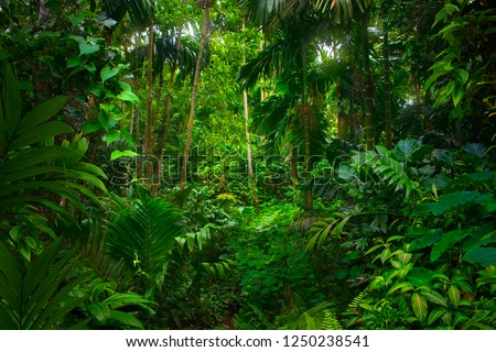 Asian tropical rainforest Royalty-Free Stock Photo #1250238541