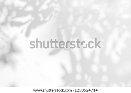Leaves shadow and stems of tree pattern background on white concrete wall texture, black and white monochrome tone, nature art on wall #1250524714