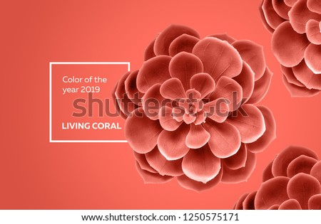 Color of the year 2019 Living Coral . Succulent background