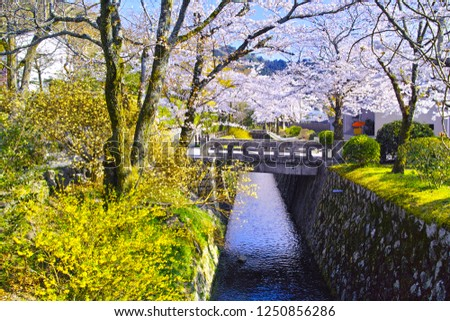 Kyoto in spring, cherry blossoms in full bloom, scenery seen from the path of philosophy #1250856286