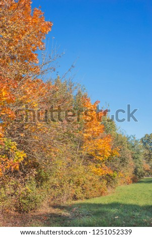 Golden autumn in the park. Nature in the vicinity of Pruzhany, Brest region, Belarus. #1251052339