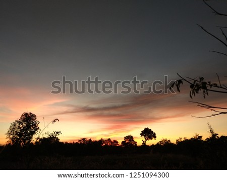 Sunset tree sky #1251094300