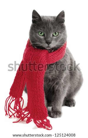 gray cat with a red Scarf #125124008