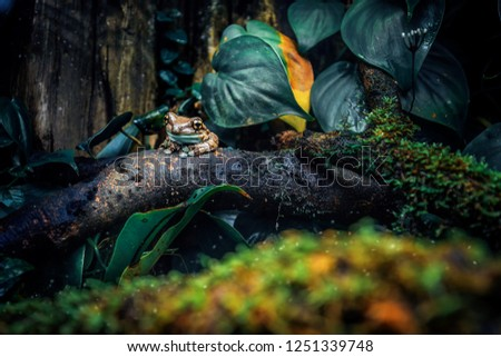 Tree frog in jungle #1251339748