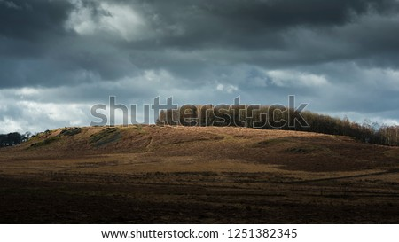A perfectly lit hill located in the beautiful Bradgate park in Leicestershire.