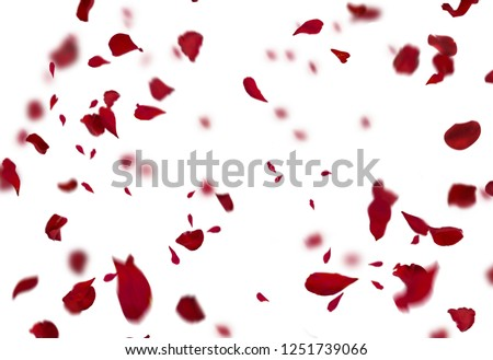 Rose Petals Stock Image #1251739066