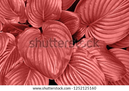 Trend photography on the theme of the new color of the year 2019 - Living Coral. Leafs in garden background.