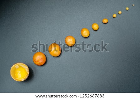 Formation of egg yolk. Eleven fragments. Top view. #1252667683