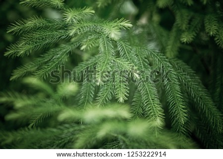 green leaves background wallpaper, texture of leaf, leaves with space for text   #1253222914