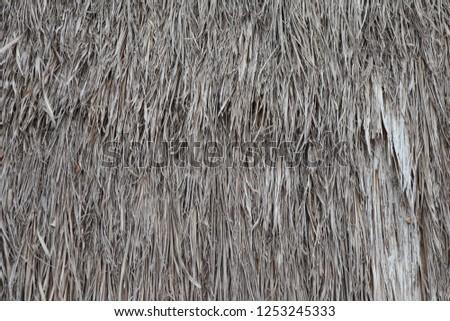 Nipa Palm Leaf background,wallpaper #1253245333
