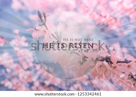 Christian Easter background, religious card. Jesus Christ resurrection concept. He is risen text on a background with pink, bright flowers, delicate spring blossom on a soft, blue sky with rays Royalty-Free Stock Photo #1253342461