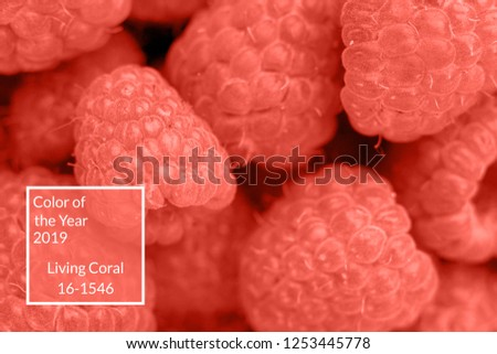Living Coral background with fresh organic raspberries, copy space. Color of the year 2019. Nature berry background. Macro photo. Top view, flat lay #1253445778