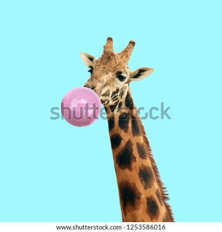 Modern art collage. Concept giraffe with bubble gum on color background. Funny animals. #1253586016