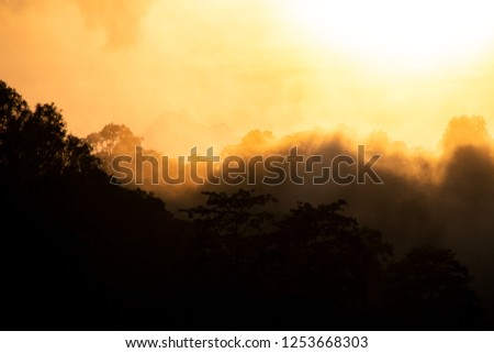 Beautiful sunrise scene with misty in morning in forest #1253668303