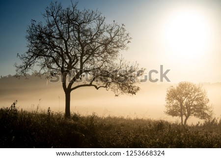 Forest morning with golden sunlight in countryside in Thailand #1253668324