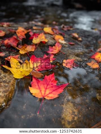 Fall Foliage in Acadia National Park  #1253742631