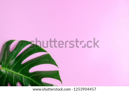 Flat lay top view green monstera leaf on bright pink background. Tropical mock up. space for text or lettering #1253904457