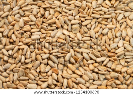 Clean Heap of sunflower seeds as background. #1254100690